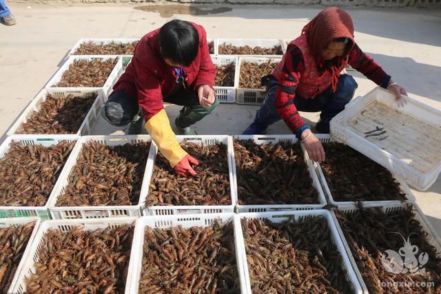 小龙虾立体养殖不靠谱观点    不可靠!室内养殖不说能不能成功了,就算成功了!成本一般人都接收不了,要想挣钱就是难上加难,风险大,成功贵。不建议养殖,现在还没有听说哪里有成功的案例。    现在市面的卖立体养殖小龙虾设备,实际就是螃蟹屋,多少年以前在电视看到国外用来养殖螃蟹和暂养的,本人也养过几年小龙虾对这个盒子养小龙虾有点看法,售价高,运费高,不能折叠几组就要装一车,养殖时放少了不划算,放多了小龙虾在退壳时有会被吃掉的可能。本身小龙虾就有互相残杀的习性,小龙虾本身有洞穴生活的习性,喜阴怕光,有很强的生存能力,立体养殖是有可能的。查了很多养殖设备就有那么两三家,就是螃蟹盒子,没有查见一家真正专门养小龙虾的立体设备。    小龙虾立体养殖靠谱的观点    可以立体养殖的呀,还很常见的,,比如龙虾和四大家鱼的混养,,,鲫鱼啥的都可以,主要就是一个养殖动物水位分布的关系。还有一个重要的因素,养鱼杀虫用一些杀虫会对龙虾有很大影响,甚至龙虾爬岸,,就是杀虫比较麻烦要注意的,使用对甲壳类无损坏的。
