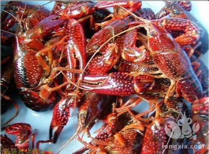 养殖户在投喂小龙虾的期间应该考虑的七要素