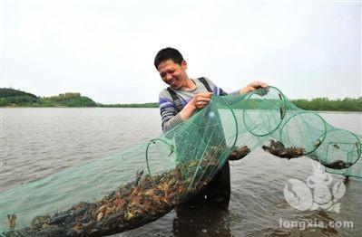 小龙虾养殖户